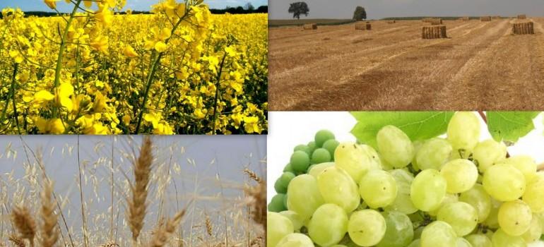 Pomoc na začatie podnikateľskej činnosti pre mladých poľnohospodárov